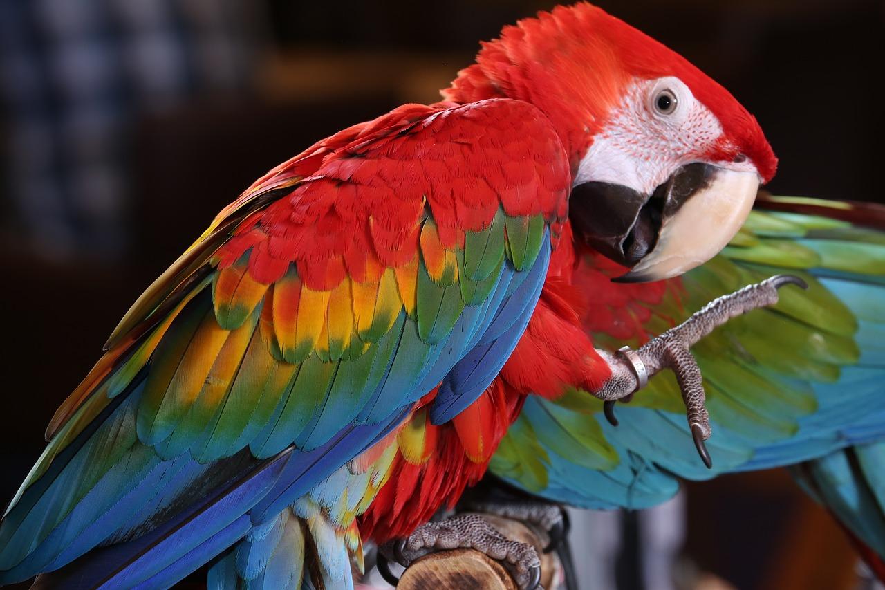 Costa Rica suuri kiertomatka ryhmille