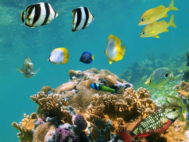 Curacao_koralli_1_800x600