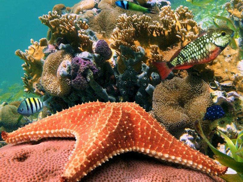Curacao_koralli_2_800x600