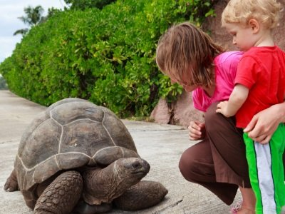 Seychellit_Feeding giant turtle400x300