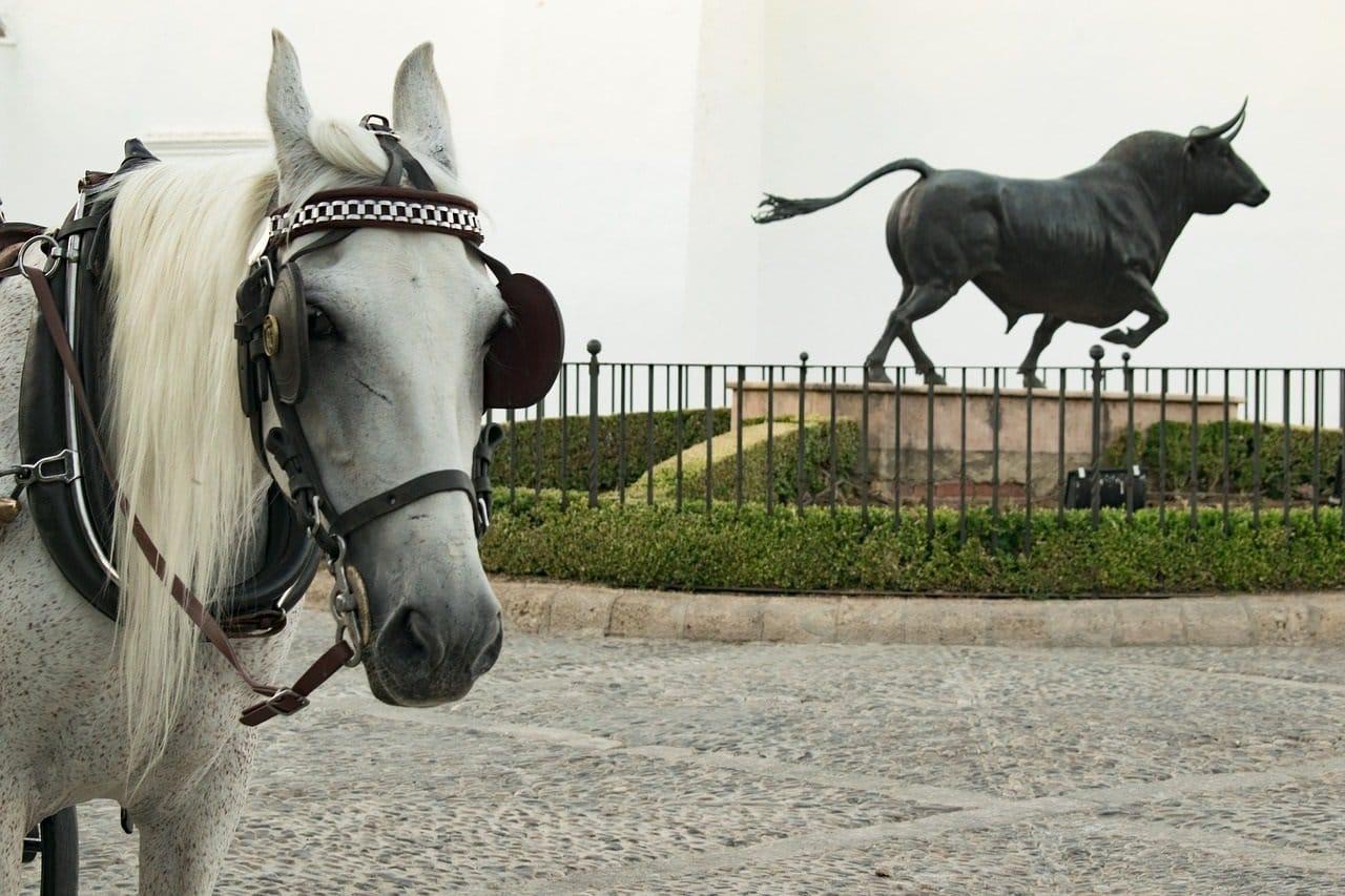 Espanja-Andalucia-Malaga-horse-2685746_1280