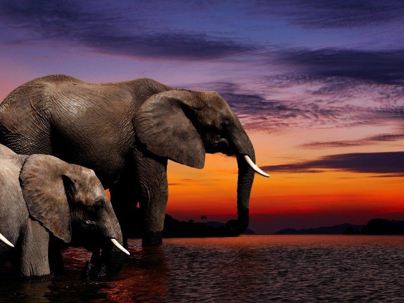 Afrikka_Elephant fantasy_800x600