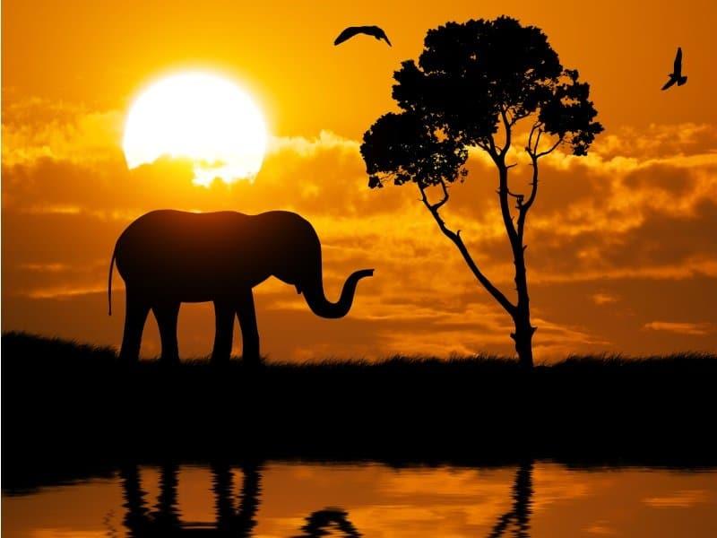 Afrikka_Silhouette of elephant_800x600