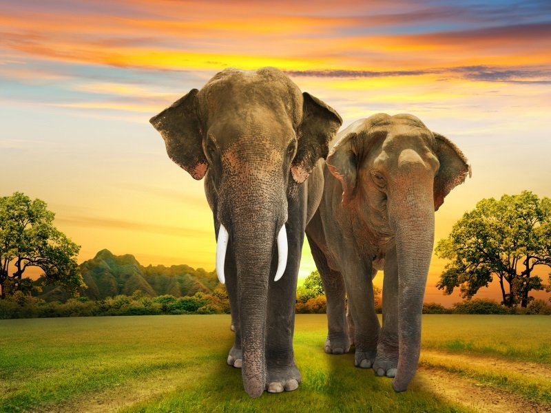 Afrikka_elephants family on sunset_800x600