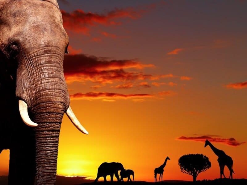 Afrikka_nature concept_800x600