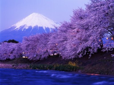 JapanI_Beautiful cherry blossoms with snow-capped Mount400x300