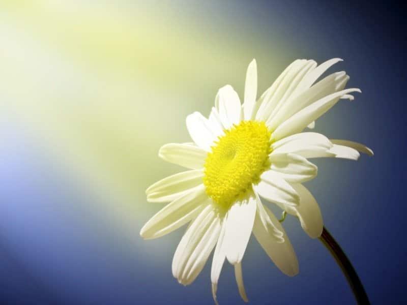 Flower_Shine_800x600