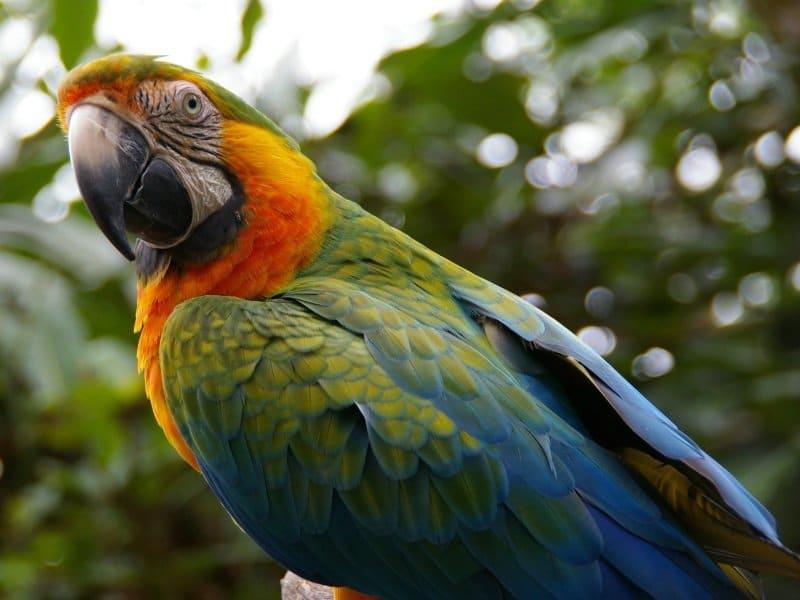 Costa_Rica_Siniara_800x600