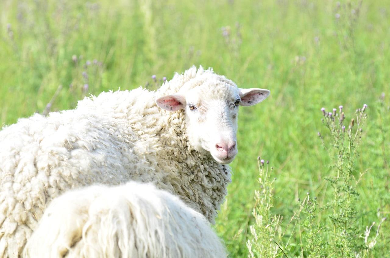 Miehikkälä matka lammasfarmille ja Salpalinjalle
