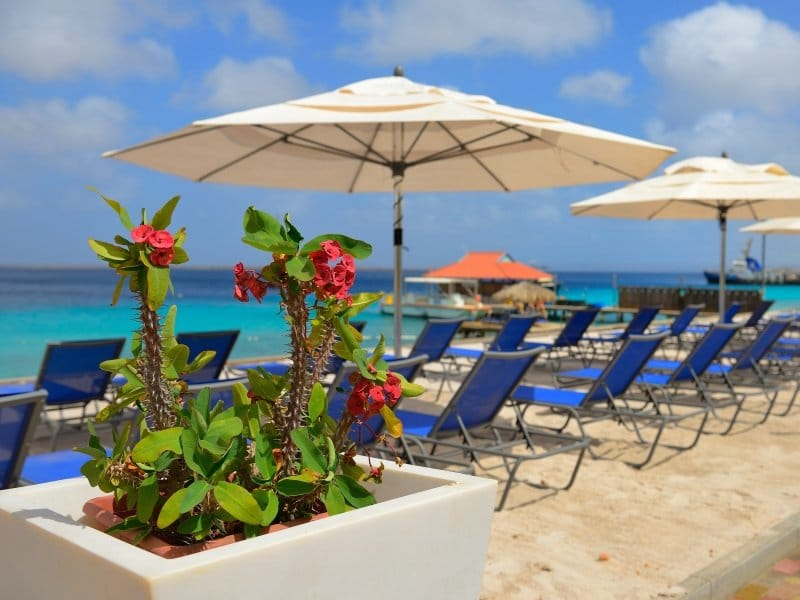 Bonaire_Divi_Flamingo_Beach_Resort_Casino_3_800x600