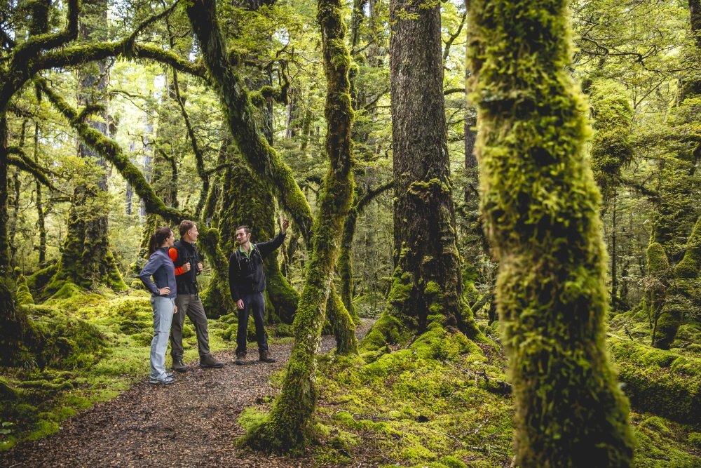 9080-Cascade-Creek-Fiordland-Miles-Holden