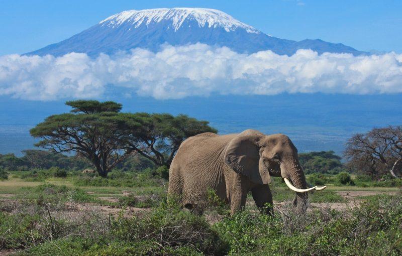 Kenia_ Mount Kilimanjaro_800x600