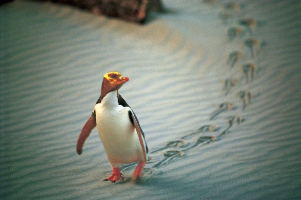NA02-Penguin-Place-Central-Otago-Penguin-Place