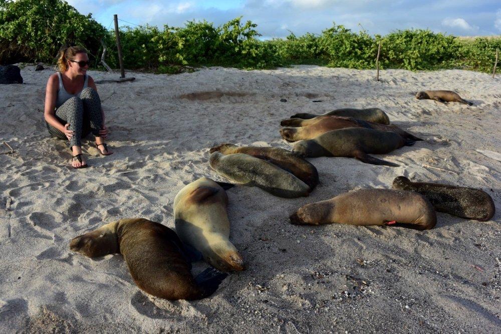 Galapagos-Merileijonat rannalla 1000