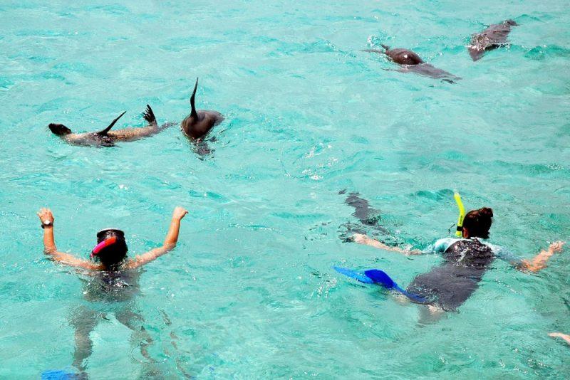 galapagos san cristobal tijeretas snorkeling with sea lions 1000