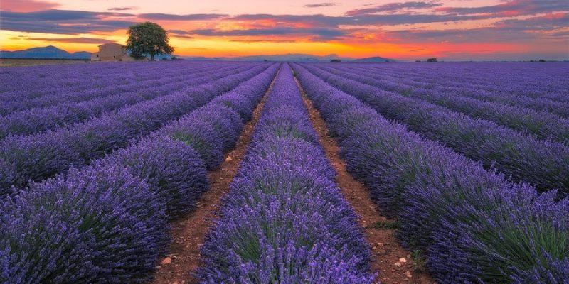 Provence 14871267654_cedcea2c01_b