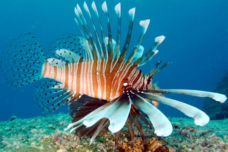 Värikäs merenalainen maailma