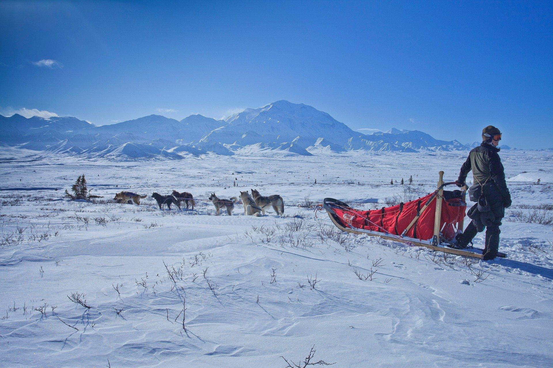 Usa-Denali-Alaska-dog-sled-1920