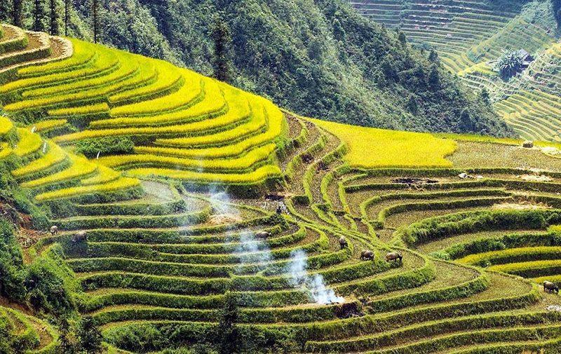 Riisiterasseja vuoristossa