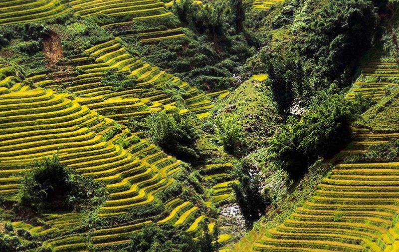 Vietnam_Rice Terrace fields