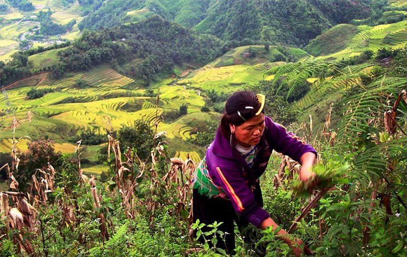 Vietnam_työskentelyä vuorilla
