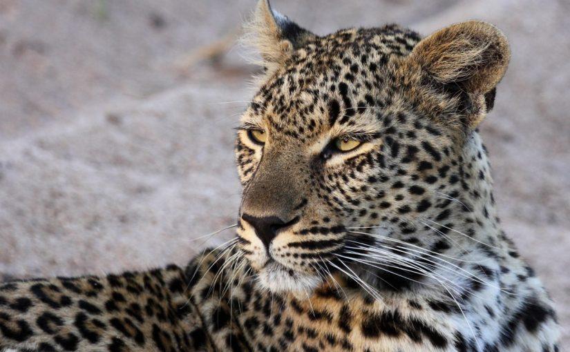 online dating Etelä-Afrikka KZN dating site arvostelua match.com