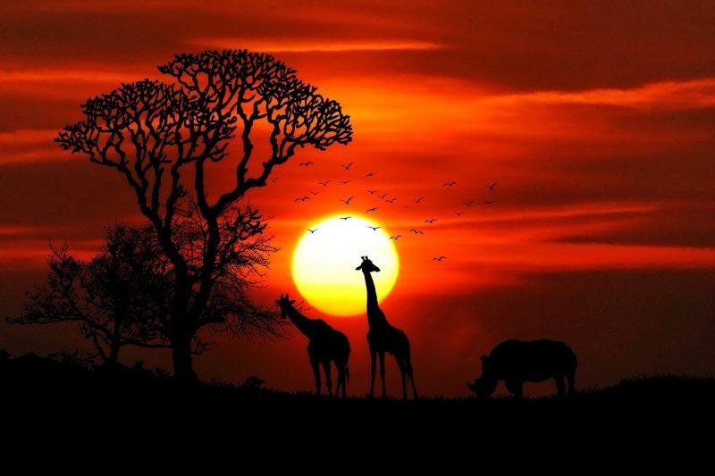 Kenian safari ja Mombasa rantaloma