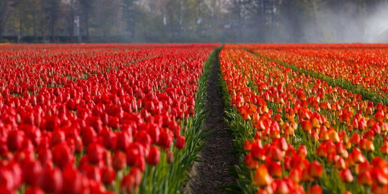 Hollanti tulppani