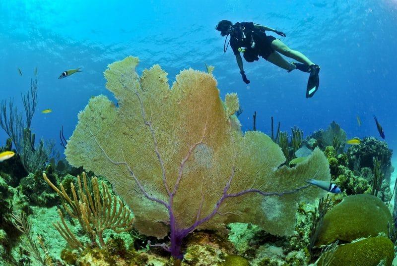 Bonaire sukellusmatka