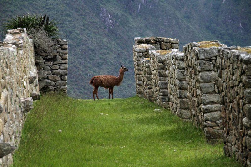 Peru kiertomatka